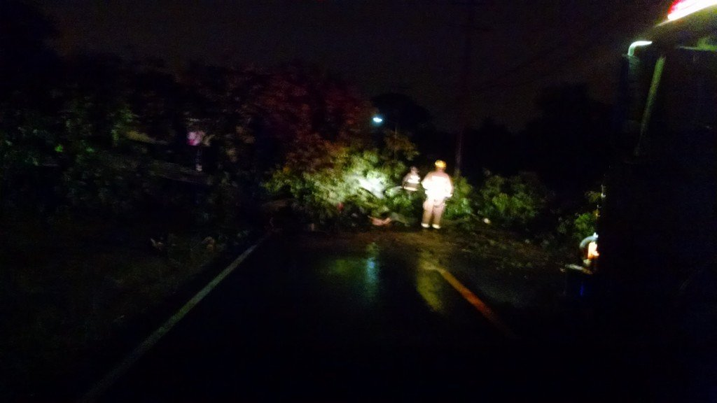 Weather Brings Down Large Tree On Andalora Way
